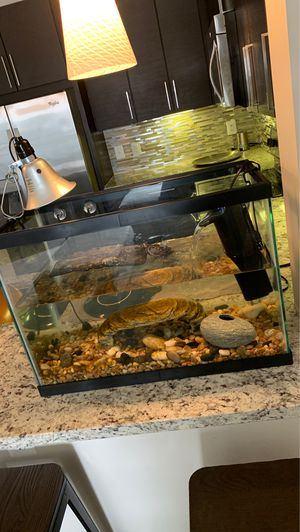 Baby turtle and tank for free for Sale in Rockville, MD