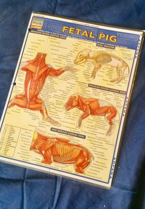 Fetal pig dissection handout for Sale in Fort Hood, TX