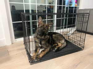 Dog crate for sale!!! for Sale in Fremont, CA