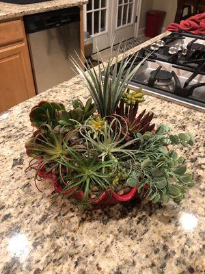 Succulent arrangement for Sale in Duluth, GA