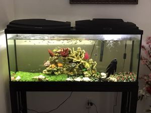 55 gallon fish tank for Sale in Phoenix, AZ