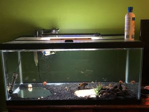 40 gallon fish tank for Sale in Rockville, MD