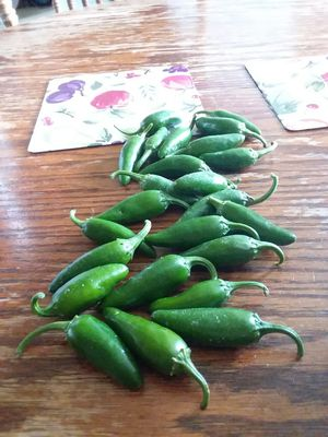 Jalapeno peppers for Sale in Waco, KY