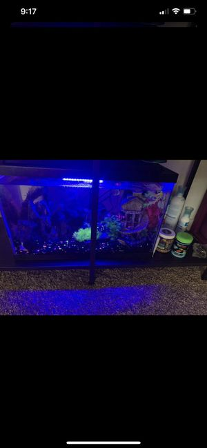 Fish tank and accessories for Sale in Denver, CO