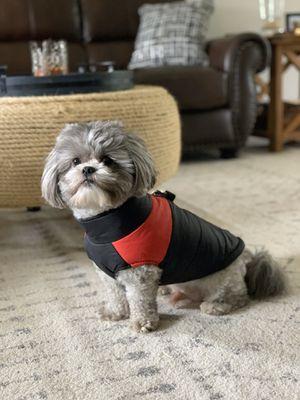 Waterproof dog coat for Sale in Carol Stream, IL