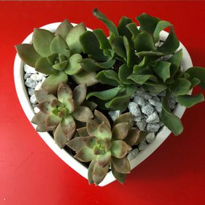 Real succulents $25 small heart arrangement for Sale in Philadelphia, PA