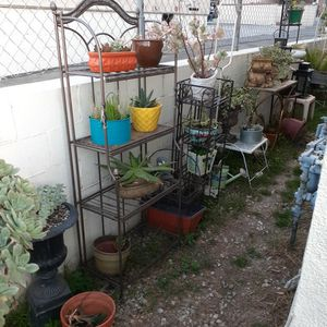 Plants Pots And Stands ask for Prices for Sale in Los Angeles, CA