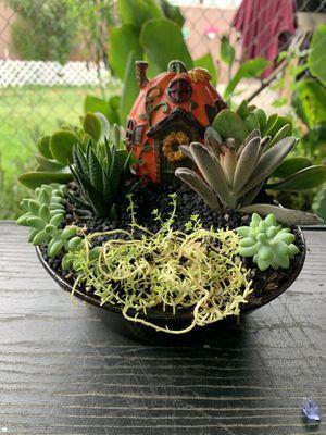 Succulent en casuelita de barro pequeña mide 9 inche de diámetro for Sale in South Gate, CA