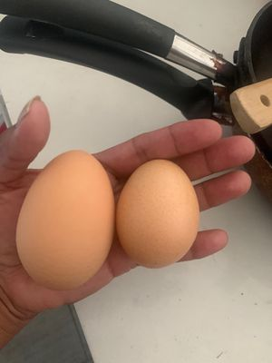 Fresh organic eggs and layers for Sale in Yucaipa, CA
