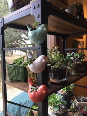 Set of three succulents in adorable magnetic vases for Sale in Austin, TX