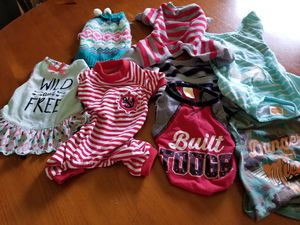 DOG SHIRTS,SWEATER...LOT OF 7! for Sale in Avon Park, FL