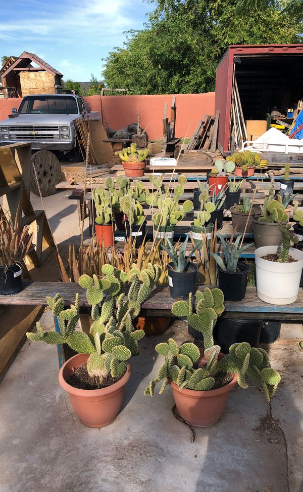 Cactus, succulents, elephant plants and other varieties for sale