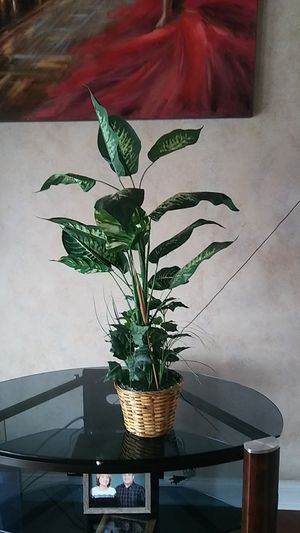 Artificial plant for Sale in Clinton, PA