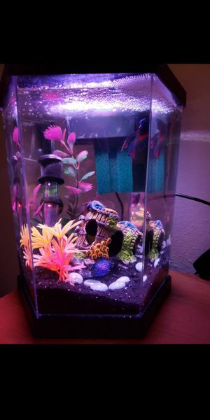 Betta fish & Tank for Sale in Glendale, AZ
