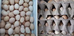 Cage-Range-Free chicken eggs for Sale in Lexington, SC