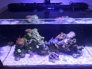IM 20g nano reef tank for Sale in Corona, CA