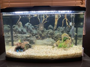 Fluval vista 16 gallon aquarium tank with decorations and fish for Sale in Renton, WA