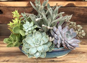 Large Variety Succulent Arrangement for Sale in Riverside, CA