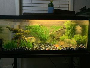20 gallon aquarium for Sale in Euclid, OH