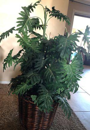 Fake indoor decorative plant for Sale in Phoenix, AZ
