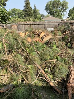 Free pine wood for Sale in Modesto, CA
