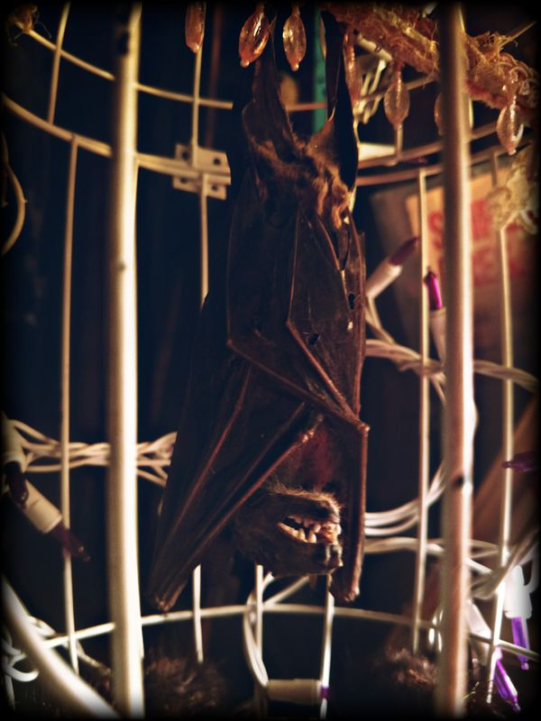 Bat in a cage filled with rage. Curiosities art