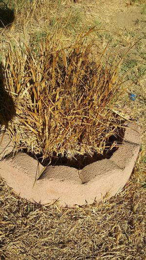 2 circular plant edgers garden for Sale in Norwalk, CA