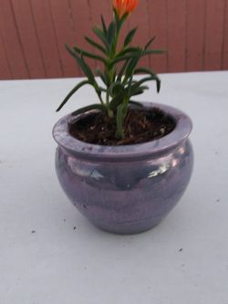 Decorative Potted Plant. $13 for Sale in Buena Park,  CA
