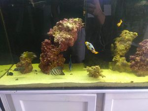Fish tank for Sale in Bell, CA