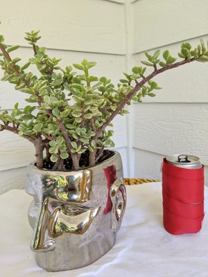 Rainbow Elephant Bush Succulent Plants in Silver Face Ceramic Planter Pot-Real Indoor House Plant for Sale in Auburn, WA