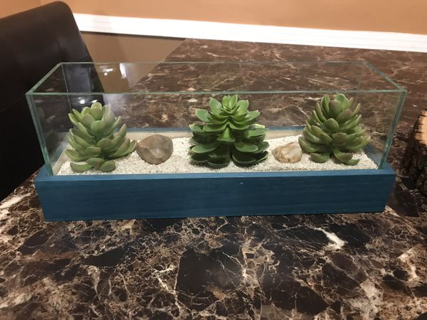Decorative succulents