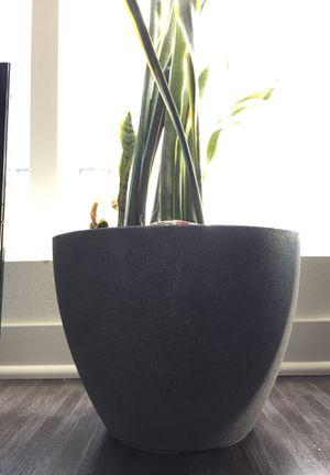 Charcoal gray flower pot grey gardening garden for Sale in Los Angeles, CA
