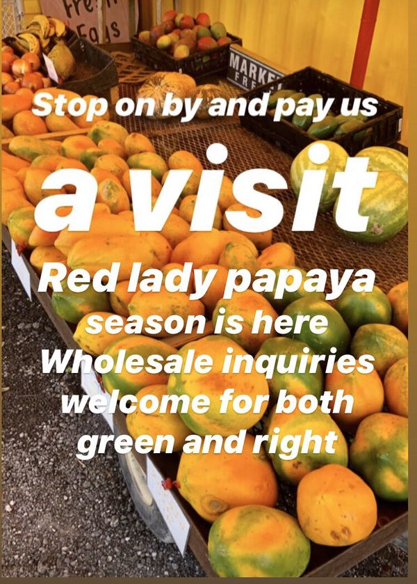 Red lady papayas