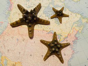 Set of Biorb Starfish for Sale in Elizabethton, TN