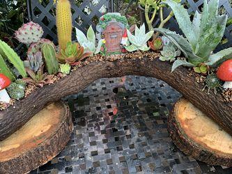 Succulent En Tronko Xgrande for Sale in Downey,  CA