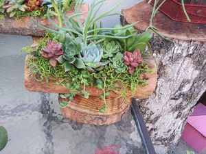 Succulents for Sale in South Gate, CA
