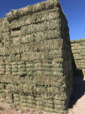 Alfalfa for Sale in Nipomo, CA