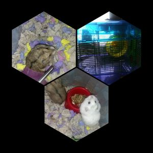 Hamster cage +2hams for Sale in Dale, TX