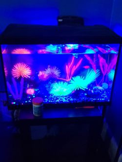 Fish Tank 20 Gallon for Sale in Greenfield,  IN