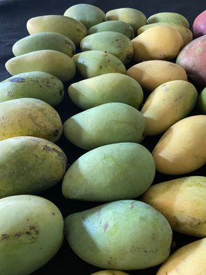 15 Carabao Mango -Philippines Mango. reputed internationally for its sweetness and exotic taste. for Sale in Hialeah, FL
