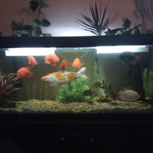 Fish Tank with FX6 Fish Sold Separately for Sale in Mission Viejo, CA