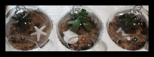 Succulent plant in a hanging glass jar for Sale in North Las Vegas, NV