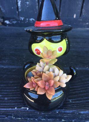 Succulent plants for Sale in Buena Park, CA