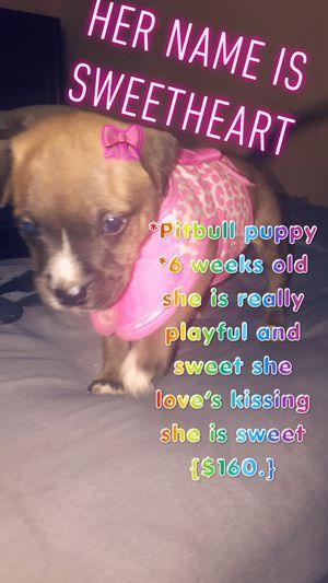 Sweet heart & princess for Sale in Shelbyville, TN
