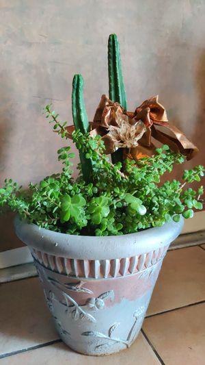 Cacti, plant, succulent, garden for Sale in Phoenix, AZ