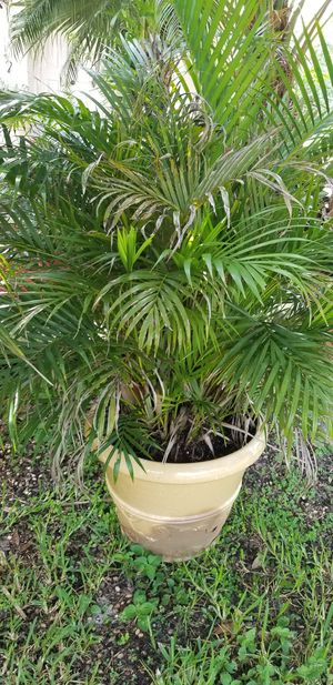Pot with plant for Sale in Parkland, FL
