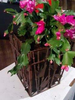 Small decorative Planter With Christmas Cactus Included for Sale in Derry,  NH