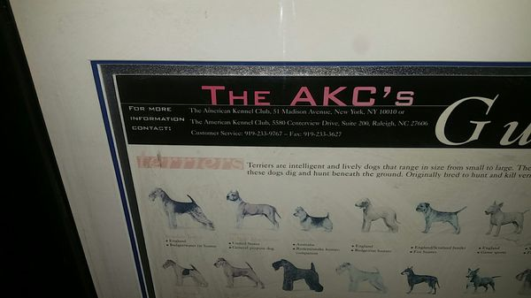 Guide To Purebred Dogs framed 45X35