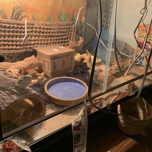 Reptile Tank for Sale in Los Angeles, CA