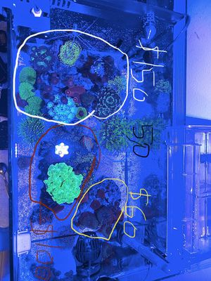 coral and rocks, saltwater fish tank, and aquarium for Sale in Rosemead, CA